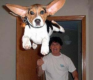 thumb_dogs_flying.jpg